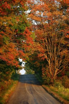 Upstate New York. I miss it during this time of year. Leaves changing, a nip in the air, trail riding in the woods. Beautiful World, Beautiful Places, Autumn Scenery, Seasons Of The Year, Fall Pictures, The Great Outdoors, Countryside, Images, Country Roads