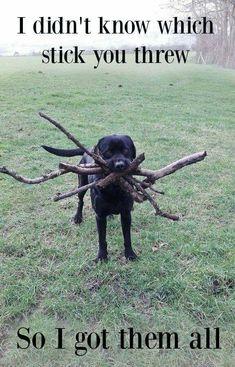 Retrieving Sticks                                                                                                                                                      More