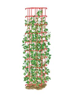 This extra-sturdy pole bean trellis tower supports vines for a bigger, better harvest of green beans, pole beans, and more. Cedar Raised Garden Beds, Cedar Garden, Veg Garden, Vegetable Gardening, Raised Beds, Veggie Gardens, Garden Oasis, Garden Types, Garden Table