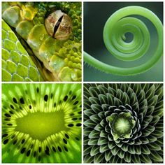 Geometría en la naturaleza