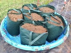 Back in April I told you about a no-frills,experimental container gardenmade from reusable shopping bags and a puppy wading pool. It's not very pretty, but did it work?