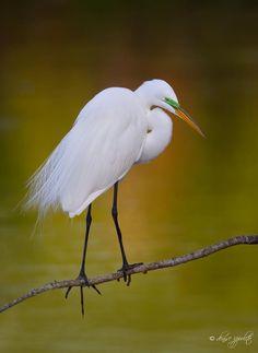 Denise Ippolito  Viera Wetlands, yesterday. Birds, Places, Photography, Painting, Animals, Animais, Fotografie, Animales, Animaux