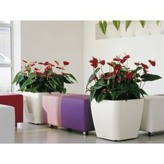 "Lechuza Quadro Planter-$99 - 20"" x 20"" w x 19 "" high square"