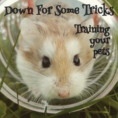 Spiffy pets need lots of love and the right environment to thrive. Hamsters are no exception to this rule. Click the image and learn how to keep your pet hamster happy and healthy. Hamster Habitat, Hamster Care, Wild Hamsters, Cute Hamsters, Reptiles, Getting Rid Of Mice, Cat In Heat, Clumping Cat Litter, Owning A Cat