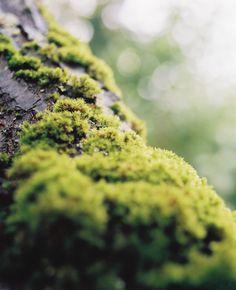 Moss by Boris Karnikowski on 500px