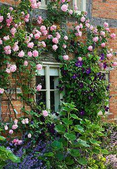 Wollerton old hall, Shropshire: South wall of the cottages with rosa 'caroline testout' and clematis 'viola' www.clivenichols.com
