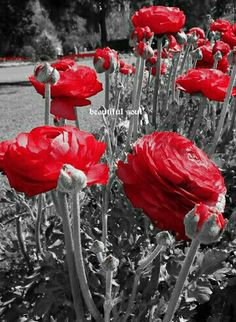 Color Splash, Red Images, Bright Paintings, Flower Wallpaper, Red And Grey, Color Photography, Black And White Photography, Red Color, Flamingo