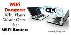 WiFi Dangers: Why Plants Won't Grow Near WiFi Routers
