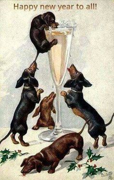 Dachshund Parade Vintage — Vintage Happy New Year Dachshunds postcard on. Vintage Dachshund, Dachshund Art, Vintage Dog, Daschund, Vintage Style, Terriers, Vintage Happy New Year, Happy New Year Pictures, New Year Postcard