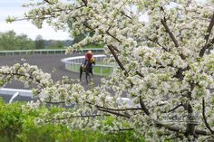 Keeneland in the spring!