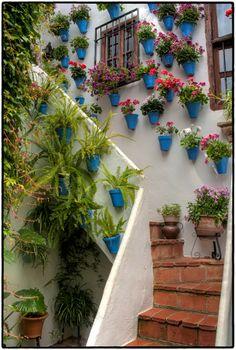 Flower Farm, Flower Pots, Outdoor Plants, Outdoor Gardens, Spanish Garden, Balcony Flowers, Low Maintenance Garden, Garden Fountains, Flower Aesthetic
