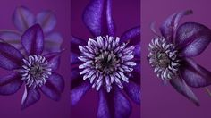 This is an in-depth course on flower and plant photography, led by one of the world's finest garden photographers, Clive Nichols. Over four weekly lessons, Clive gives invaluable advice on both the practical and artistic aspects of flower and plant photography, drawn from his 25 years' experience. He also sets...