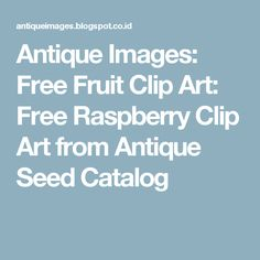 Antique Images: Free Fruit Clip Art: Free Raspberry Clip Art from Antique Seed Catalog