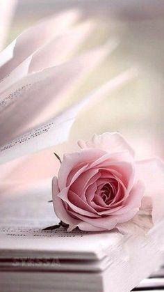 Beautiful Flowers Wallpapers, Beautiful Rose Flowers, Flower Phone Wallpaper, Flower Wallpaper, Flower Backgrounds, Wallpaper Backgrounds, Book Flowers, Flower Aesthetic, Jolie Photo