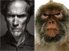 Celebrity Pet Look-A-Likes