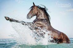 Djerba - Horse Photography, Dog Photography, Photography Bettina Niedermayr Horses -