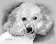 Great eyes, dog drawing