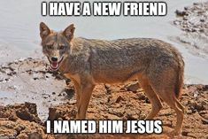 I HAVE A NEW FRIEND I NAMED HIM JESUS | image tagged in jackal | made w/ Imgflip meme maker