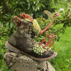 suculants in a shoe Suculent Plants, Old Boots, Hens And Chicks, Backyard Retreat, Container Gardening, Gardening Tips, Container Flowers, Succulent Pots, Types Of Plants
