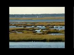 The Tributaries of Mankiller & Absecon Bays - These waterways incorporate Atlantic City, Absecon and Brigantine; and empty into the Atlantic Ocean on the north and south sides of Brigantine Island. The area is a wildlife refuge, in which many species of birds are found.