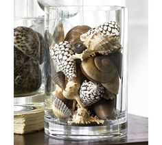 Beach Shell Vase Filler - different Add a touch of seaside charm to a room by arranging these shells in sand or in a vase. Assorted: Set of approximately 11. White: Set of approximately 15.