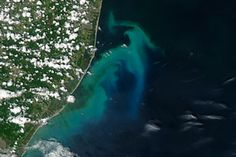 Phytoplankton Bloom off New Jersey : Natural Hazards : NASA Earth Observatory
