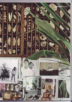 Beach House Inspiration curated by The Interior Outlet, Castle Hill, Sydney. Shadow box for shells