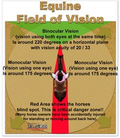Equine Field of Vision...repinned with thanks by DressageWaiakto.co.nz...