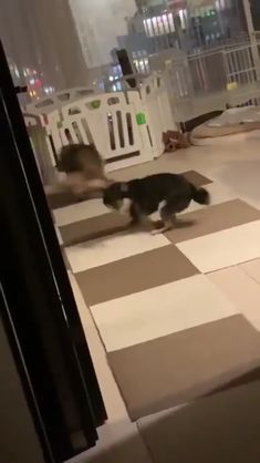 Okay, let's both spin. Cute Funny Animals, Cute Baby Animals, Animals And Pets, Cute Cats, Cute Animal Videos, Funny Animal Pictures, Funny Dog Videos, Funny Dogs, Chien Golden Retriever