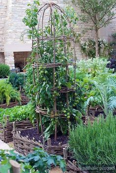 Potager Garden 30 Garden Projects using Sticks Twigs - Creative garden features you can DIY for free using twigs, sticks, and branches. Ideas include trellises and plant supports as well as garden artwork Potager Garden, Garden Trellis, Garden Beds, Obelisk Trellis, Wood Trellis, Obelisks, Balcony Garden, Garden Landscaping, Tomato Trellis