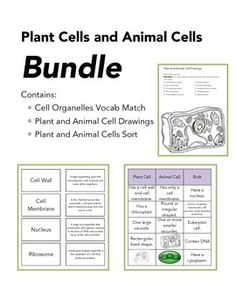 The Wright Ladies present the plant and animal cell bundle. This is your opportunity to get all of our cell products at a discount price. Enjoy our cells drawing worksheets, cell organelle match up, and our cell sort for one low price.