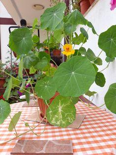 Ikebana, Plant Leaves, Plants, Plant, Flower Arrangements, Planets