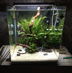 Betta Aquarium, Paludarium, Vivarium, Aquascaping Plants, Nano Cube, Betta Fish Tank, Nano Tank, Granite Colors, Pet Fish