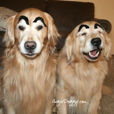 Groucho Marx doggies!