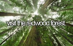bucket list : visit the redwood forest