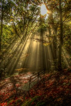 Rays of light...
