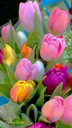 Экзотические Цветы, Красивые Розы, Красочные Цветы, Тюльпановый Сад, Розовые Тюльпаны, Цветоводство, Розовые Цветы, Фиолетовые Розы, Флористы