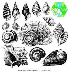 Hand drawn collection of various seashell illustrations isolated on white background by Liliya Shlapak, via Shutterstock: