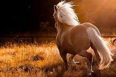 Horses are one of the most friendly animals for people. You can find the most beautiful horses in this photo gallery. Horse scenes, images of different horse types, wild horses are waiting for you. All The Pretty Horses, Beautiful Horses, Animals Beautiful, Beautiful Images, Romantic Images, Beautiful Beautiful, Beautiful Flowers, Cavalo Wallpaper, 1366x768 Wallpaper