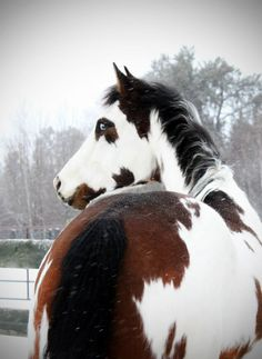pinto | equine photography- eeeeek i love how pretty this horse is