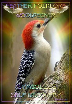 Woodpecker - symbolises self discovery