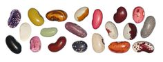 http://www.mon-bio-jardin.com/images/graines-haricots-couleurs.jpg