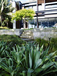 Beschorneria yuccoides Green Garden, Tropical Garden, Garden Plants, Succulent Landscaping, Home Landscaping, Drought Tolerant Garden, Australian Garden, Ornamental Grasses, Garden Spaces