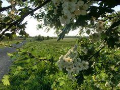 WWW  Wiersze Wycieczki Wspomnienia: Wiersz o wiośnie dla dzieci: Już wiosna!