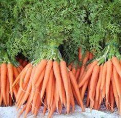 Como plantar cenouras - 7 passos - umComo