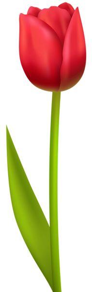 Red Tulip PNG Transparent Clip Art Image