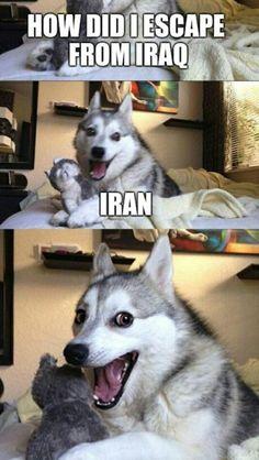 Funny Dog Fails, Funny Dog Jokes, Dad Jokes, Stupid Funny Memes, Haha Funny, Pun Husky, Husky Jokes, Funny Animal Videos, Cute Funny Animals