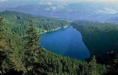 Černé jezero se nachází na Šumavě, leží v ledovcovém karu