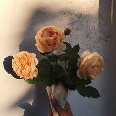 """visvya: """" https://www.instagram.com/p/4NkD43DJWC/ """""""