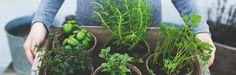 8 Home-Grown Plants For Naturally Glowing Skin - mindbodygreen.com